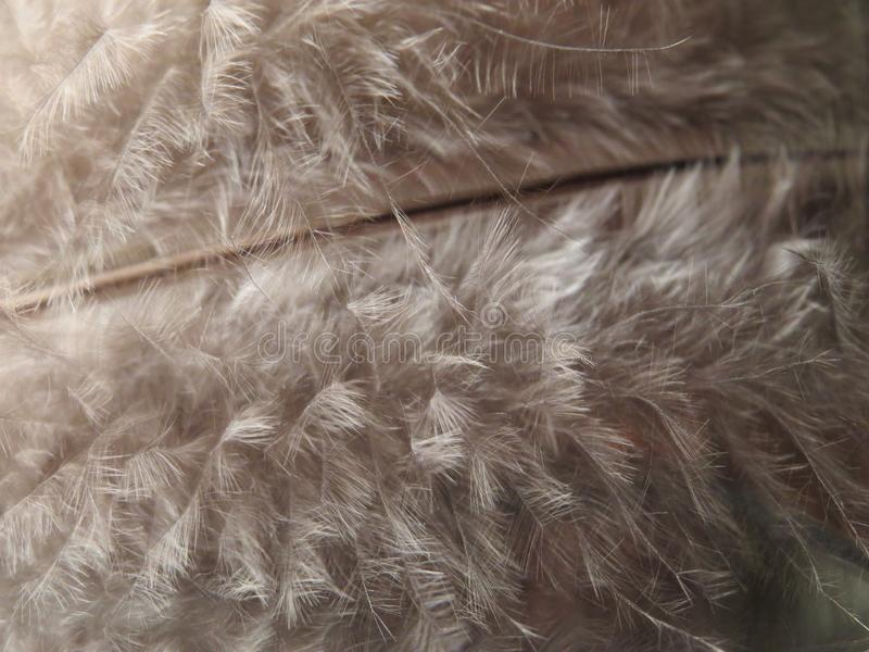 Soft feather up close. Delicate and fluffy details. Feather up close showing delicate and soft details royalty free stock images