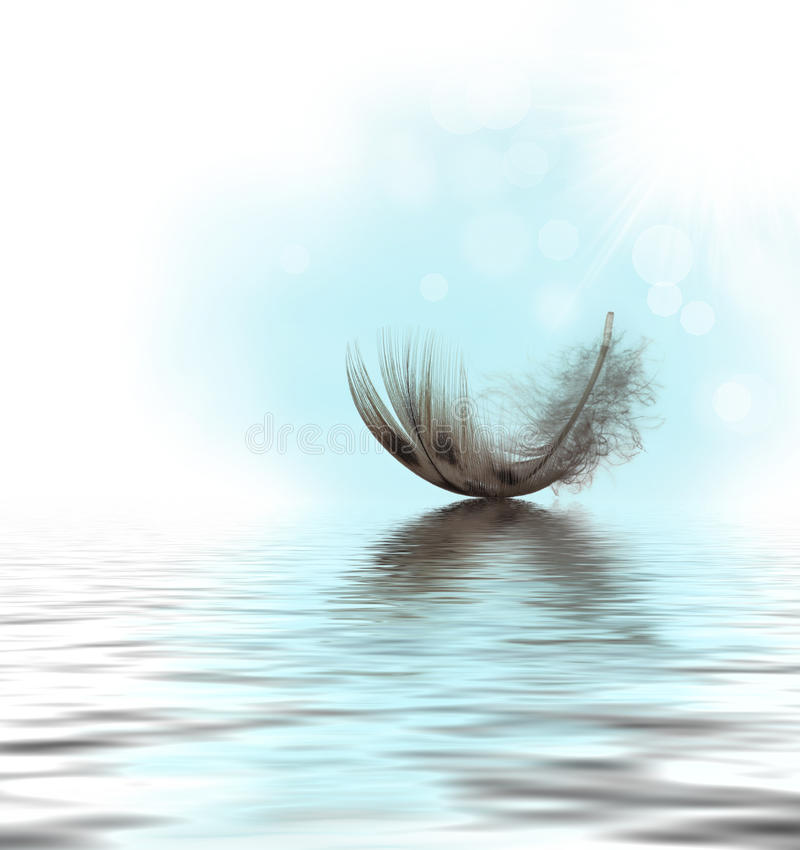 Feather on water. Feather drifting on water with a blue sky and bokeh
