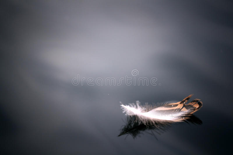 Feather on the water angels background beautiful bird black blue close. Concept royalty free stock photos