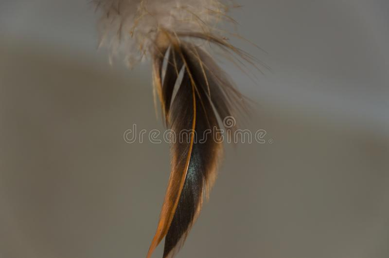 Feather in water royalty free stock photos