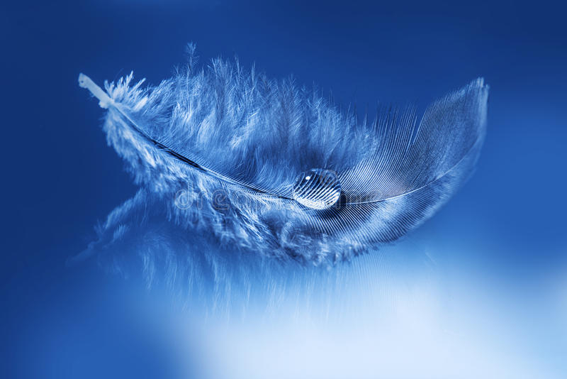 Feather with water drop stock images