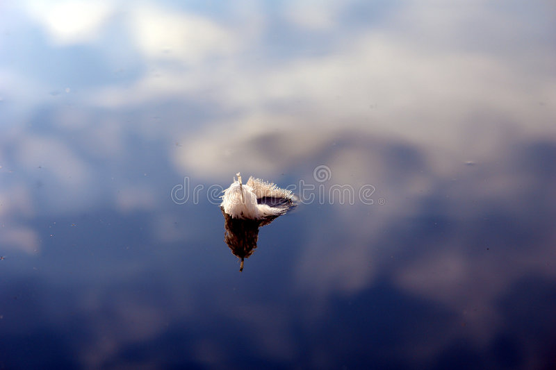 Feather on the water with reflection of blue sky royalty free stock photos