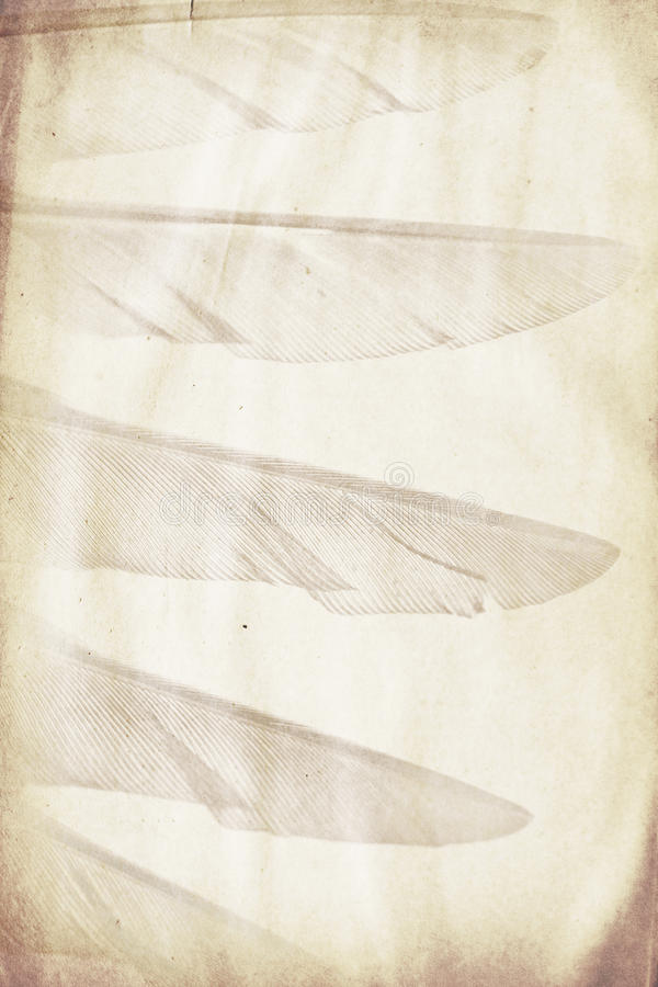 Feather watermark. Watermark in the form of a bird wing on the grunge paper stock photo
