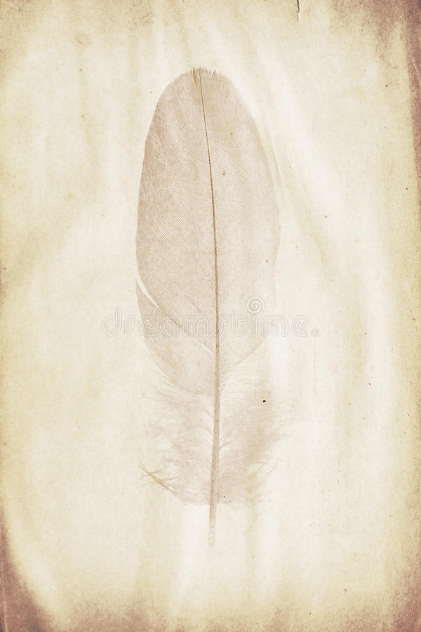 Feather watermark. Watermark in the form of a feather on the grunge paper royalty free stock images