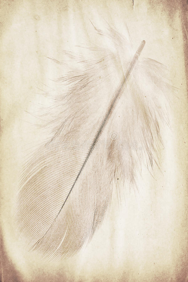Feather watermark. Watermark in the form of a feather on the grunge paper stock images