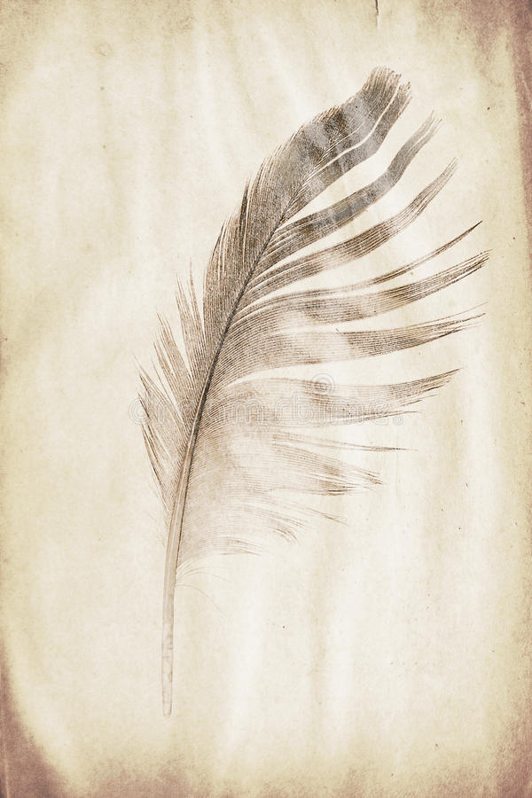 Feather watermark. Watermark in the form of a feather on the grunge paper royalty free stock photos
