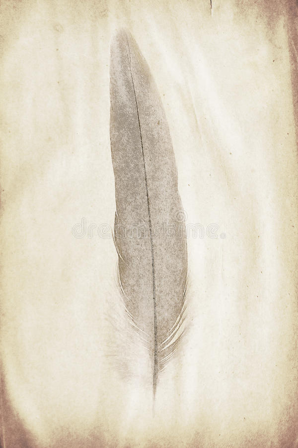 Feather watermark. Watermark in the form of a feather on the grunge paper royalty free stock photography