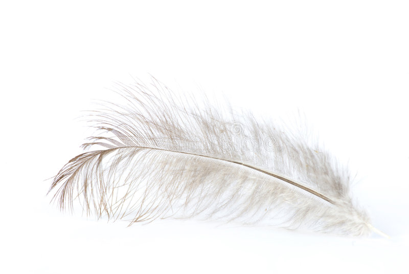 Feather on white royalty free stock image