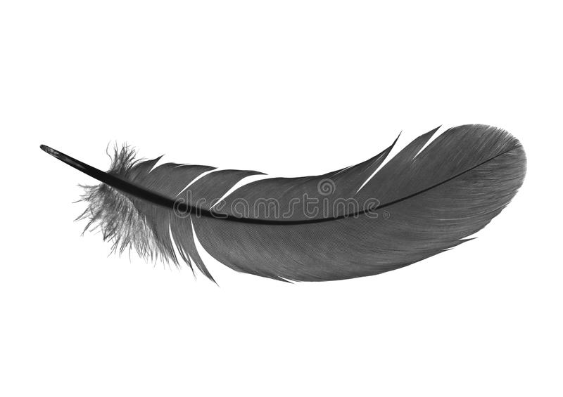 Feather royalty free stock images