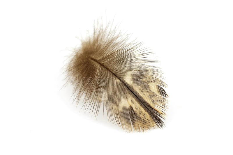 Feather. On a white background stock photography