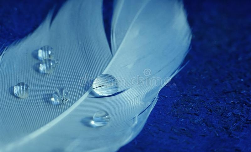 Feather white drops water blue background close-up. Feather close-up drops water blue color background decor royalty free stock photography