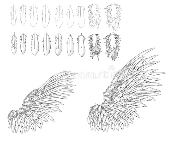 Download Feather and wings stock vector. Illustration of birds - 12730008