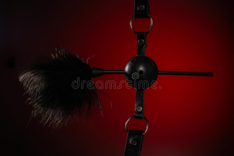 Feathered and ball gag fetish equipment isolated on red background. Image stock images
