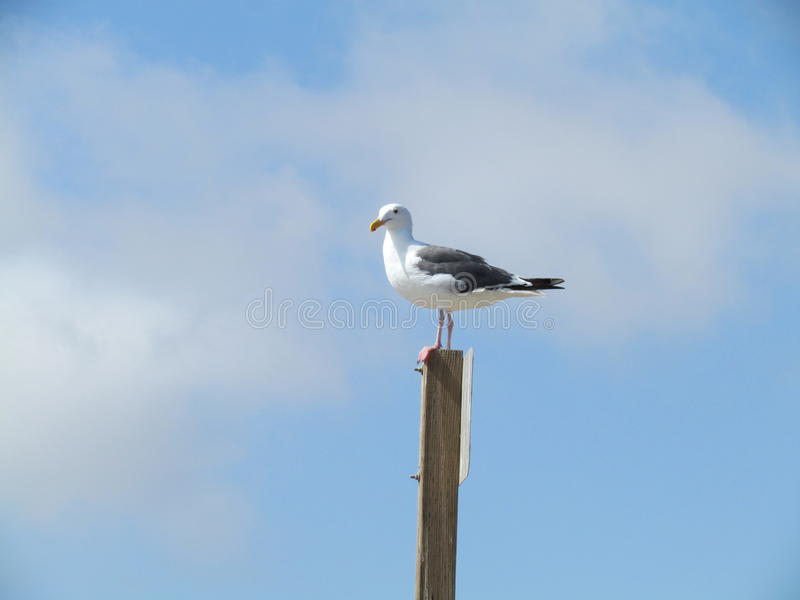 Feathered Friend. A feathered friend gazes towards the ocean while comfortably basking in the sunshine stock photography