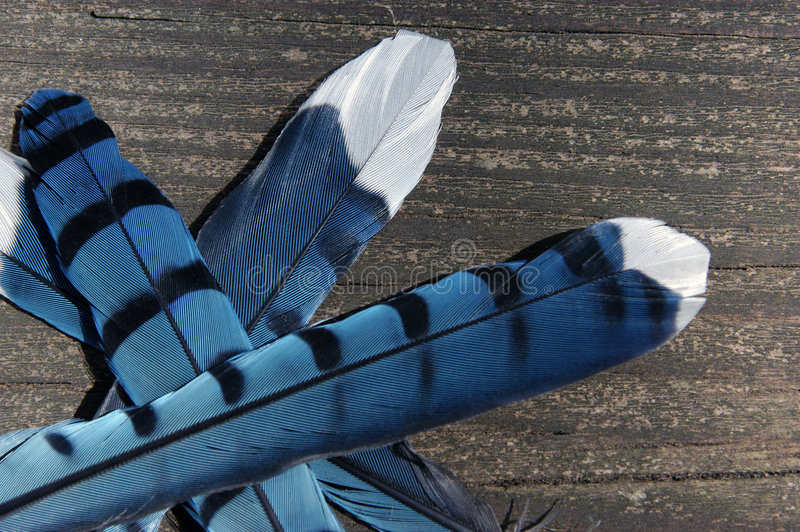 Download Feathers stock photo. Image of feather, animal, bird, wildlife - 109254