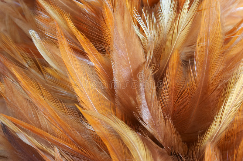 Download Feathers Royalty Free Stock Image - Image: 1261676