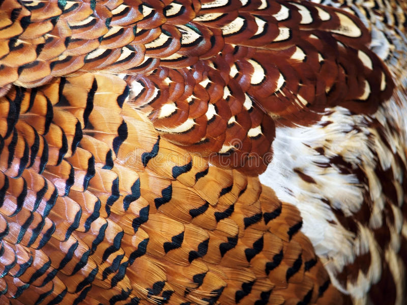 Feathers stock photography