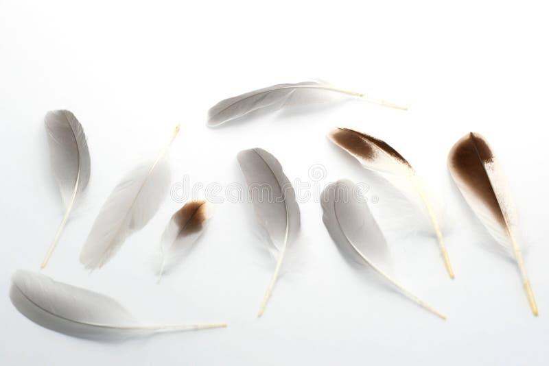 Feathers-2 fotografía de archivo
