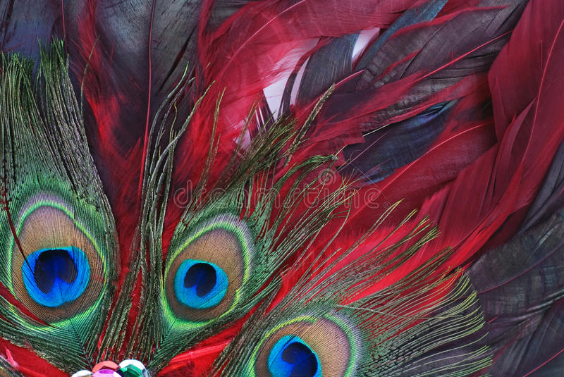Feathers. Colorful feathers background of close up stock images