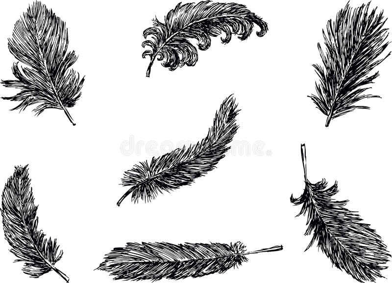 Download Feathers stock vector. Illustration of feathers, white - 24904237
