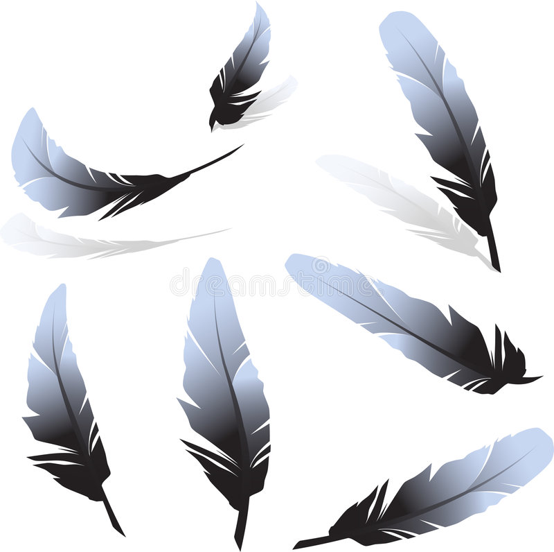 Feathers. Set of feathers on white surface royalty free illustration