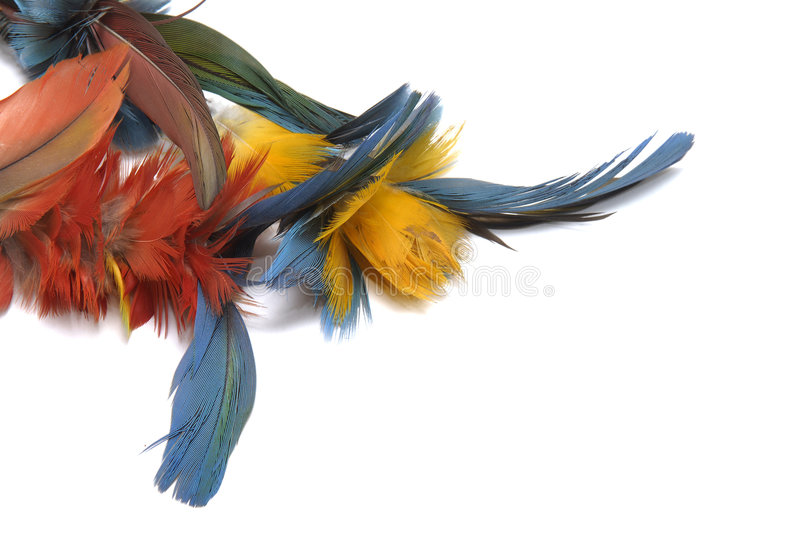Feathers. Indian colorful feathers isolated in white stock images