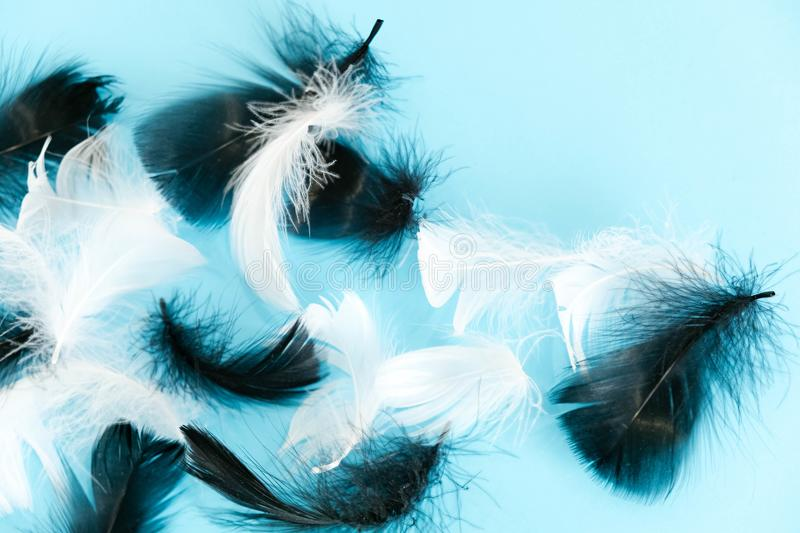 Feathers abstract background. Background for design with soft colorfull feathers pattern. Soft fluffy feathers on turquoise, day d. Feathers abstract background royalty free stock photography