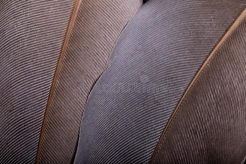 Feathers abstract close-up. stock images