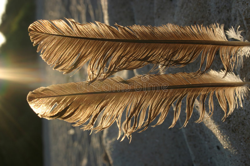Feathers against the sun #3 royalty free stock photo
