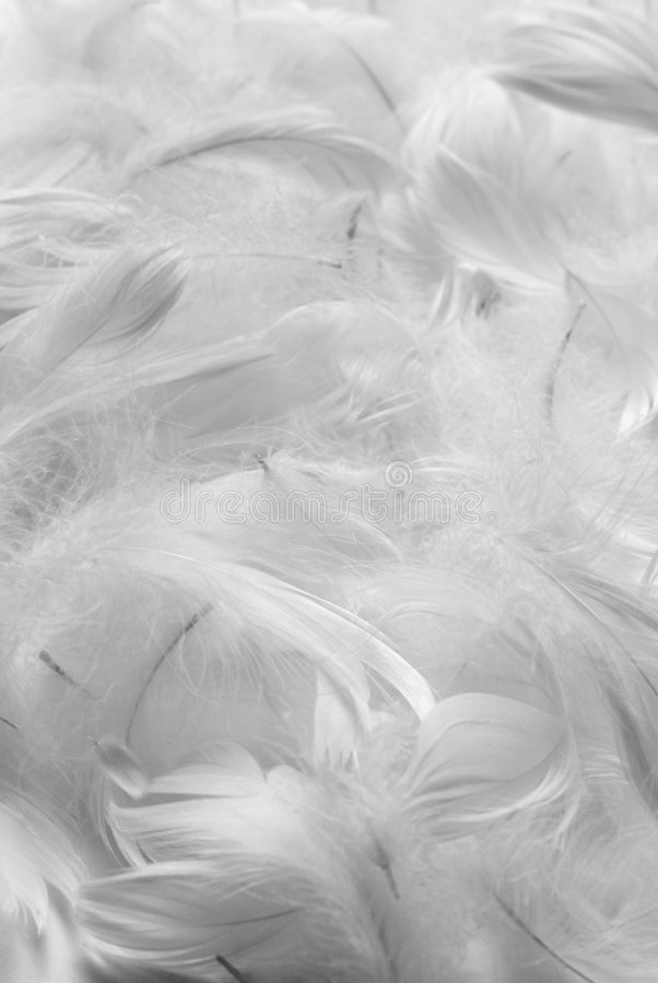 Feathers bw background royalty free stock photography