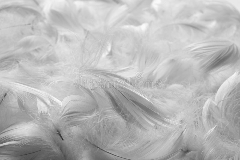 Feathers bw background stock photography