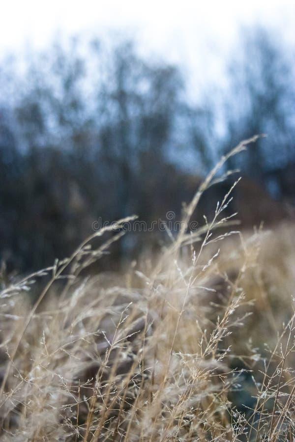 Feathers1 de oro oscilante imagen de archivo libre de regalías