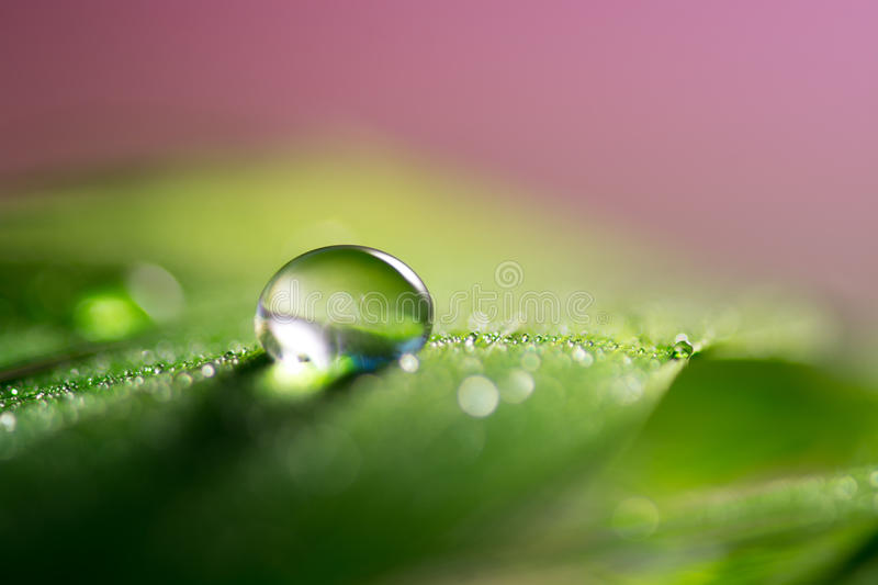 Feathers with a drop of water with a nice green color.Macro feather royalty free stock photography