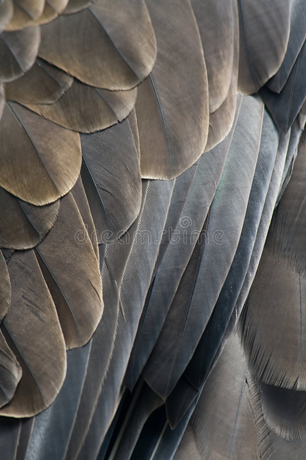 Download Feathers of an eagle stock image. Image of plume, brown - 6422515