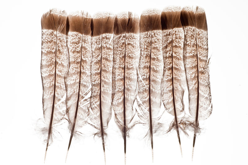 Download Feathers isolated on white stock photo. Image of fowl - 14969804