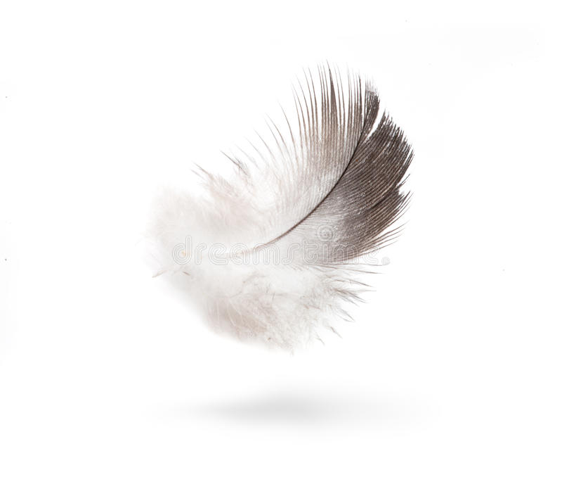 Feathers isolated white background royalty free stock photography