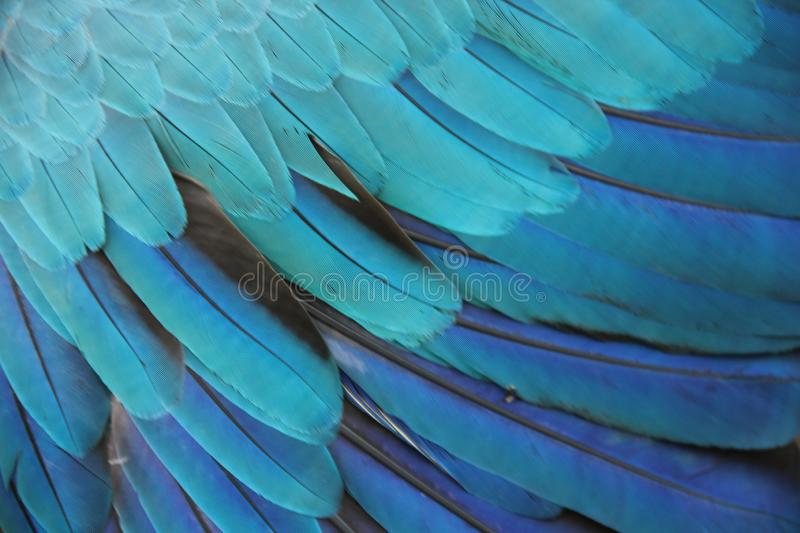 The feathers of a Macaw. A close up of the feathers of a blue and yellow Macaw at a bird park in Santa Cruz, Bolivia stock image