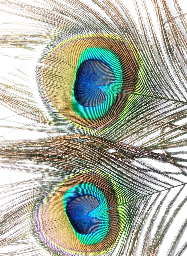 Download Feathers Of Peacock Or Peahen Stock Image - Image of peafowl, blue: 86692187