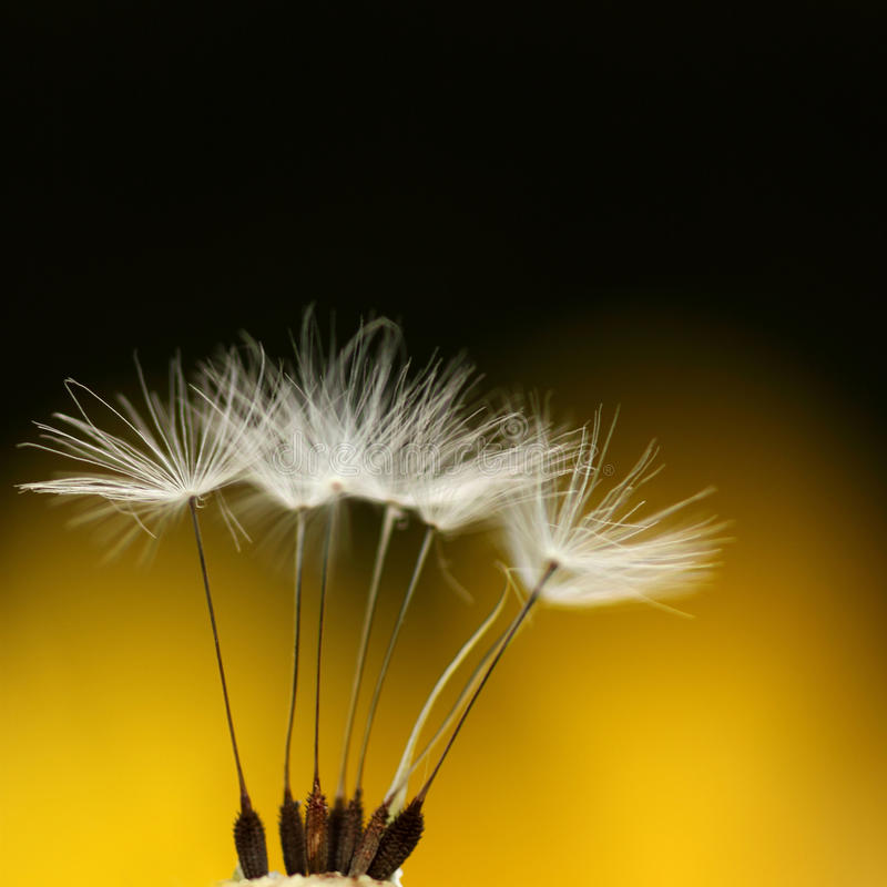 Download Feathery Stock Photos - Image: 14734033