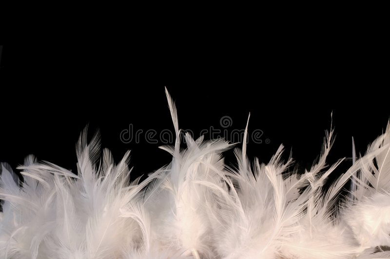 Feathery border royalty free stock image