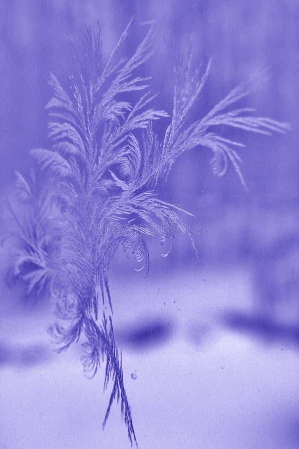 Feathery Ice royalty free stock photos