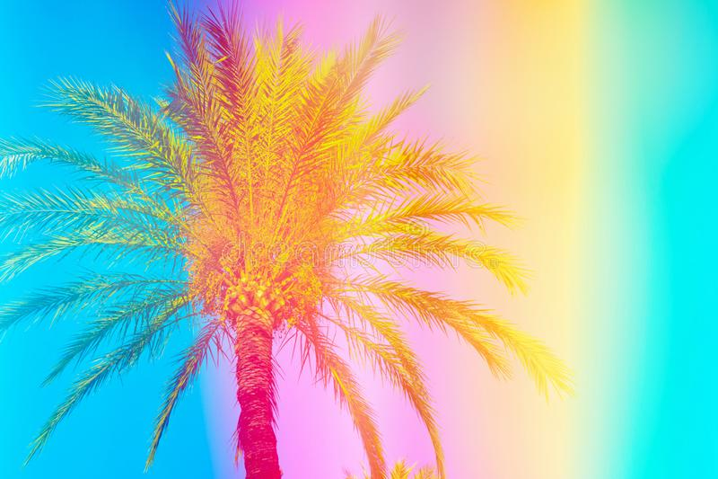 Feathery palm tree on sky background toned in vibrant saturated rainbow neon pastel colors. Surrealistic funky style. Tropical royalty free stock photos