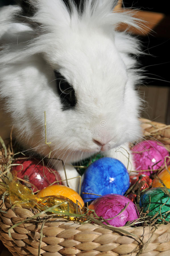 Free Feature Photo Easter Stock Photo - 19829270