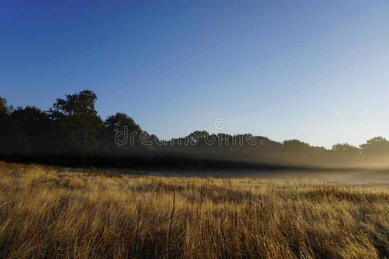 Foggy Golden Grass in Nature Park. Features blue skies background sunny foggy day over golden grass land and outlines meadow trees stock photos