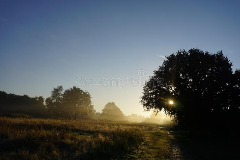 Foggy Sun Set in Nature Park. It features setting of the sun in a foggy condition through the meadow tress and plants, with blue skies background stock photos