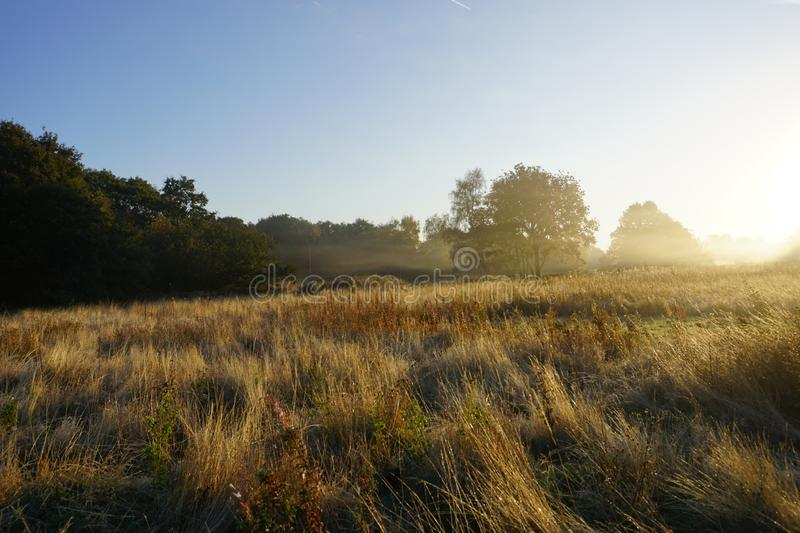 Foggy Sun Set in Nature Park. It features setting of the sun in a foggy condition through the meadow tress and plants, with blue skies background stock image