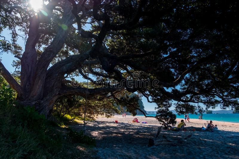 2019 FEB 19, New Zealand, Coromandel -  Chathdral cove the travelling destination in a beautiful day stock images