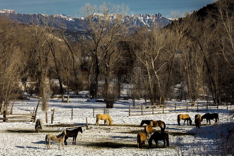 FEB 24, 2019, RIDGWAY, COLORADO USA - Horse Ranch under Cimeron Mountains outside of Ridgway Colorado on State Route 550 royalty free stock photography