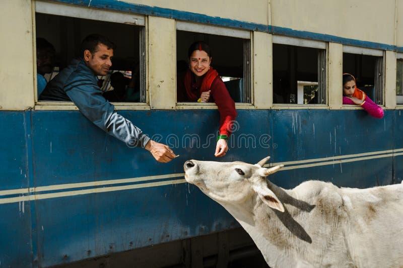 27. Februar 2018 Indien zwei Inder ziehen die Kuh durch Zugfenster ein stockfoto