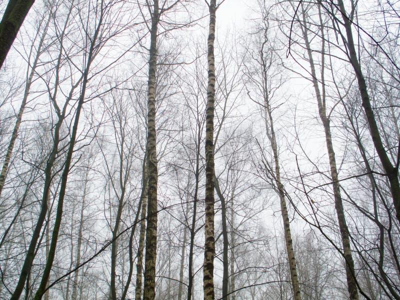 Februar-Waldung im Nebel lizenzfreie stockfotografie